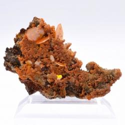 Wulfenite, minium & mimetite, Shah Milleh Mine, Persia.